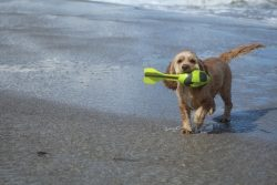 pet friendly vacation in Fort Myers Beach