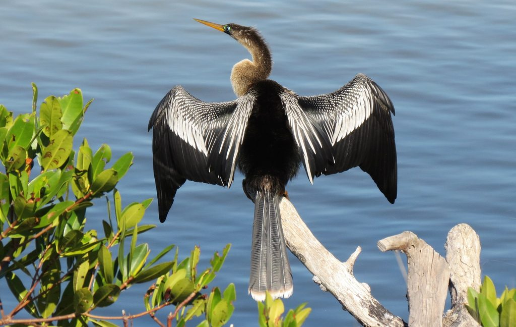 Anhinga || TriPower Vacation Rentals in Fort Myers Beach FL