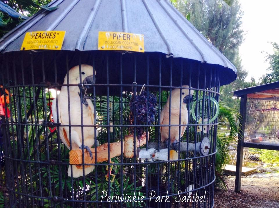 Visit the Mini Zoo on Sanibel Island || TriPower Vacation Rentals in Fort Myers Beach