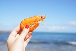 person holding shrimp in hand